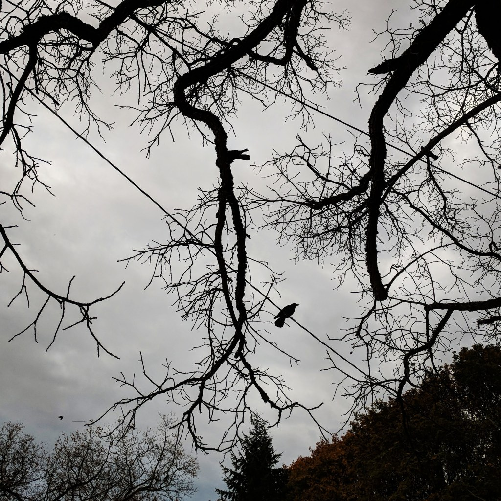 Crows on bare tree branches against a gray sky